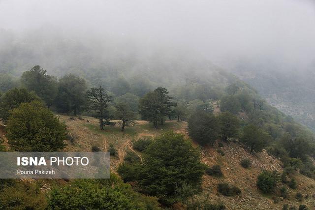 خشکسالی از یک طرف، آفات هم به جان جنگل های ایران افتاده است