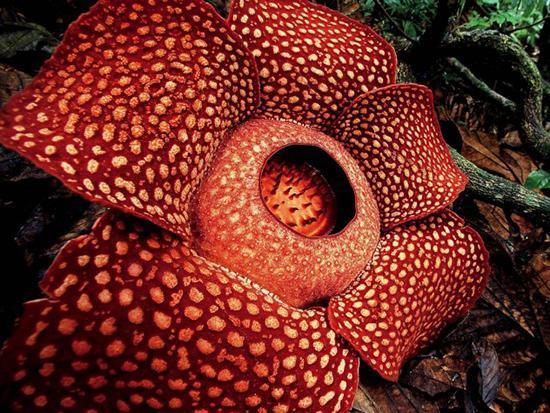 عجیب ترین گل های دنیا!