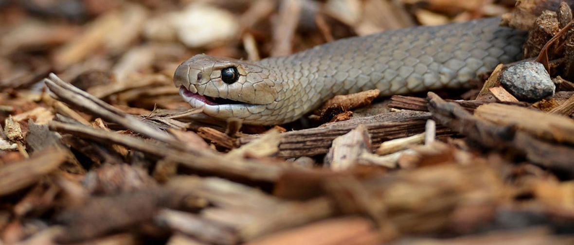 10 حیوان خطرناک و مرگبار در استرالیا؛ هنگام سفر مراقب باشید