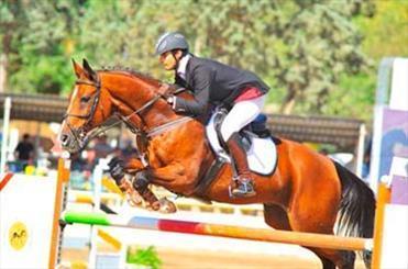 تنگناهای پرورش اسب در همدان، سرمایه گذاران پرورش اسب به تاخت از همدان خارج می شوند