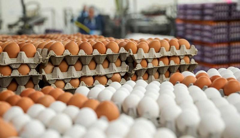 قیمت هر شانه تخم مرغ در بازار چقدر شده است؟