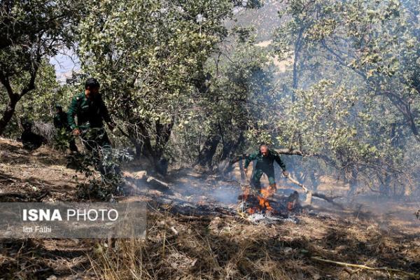 21 هزار هکتار از جنگل های ایران طی سال 99 درگیر حریق بودند
